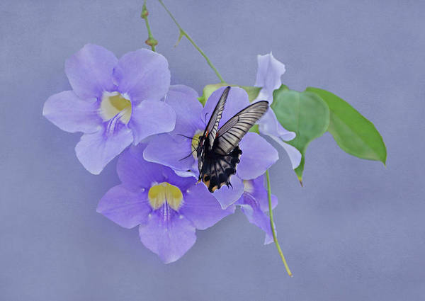 Photograph - Butterfly Fluttering by Sandy Keeton