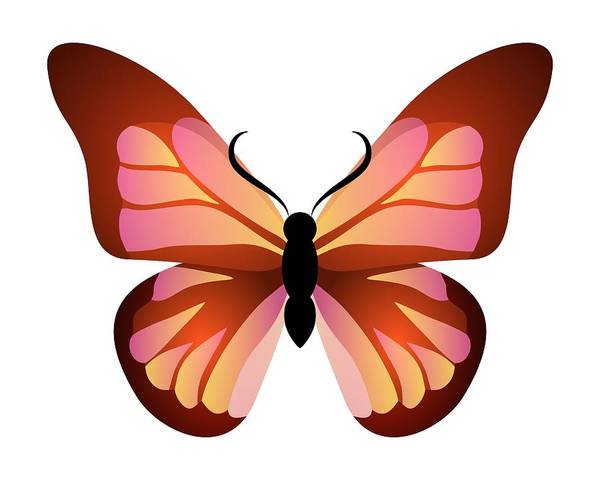 Digital Art - Butterfly Graphic Pink And Orange by MM Anderson