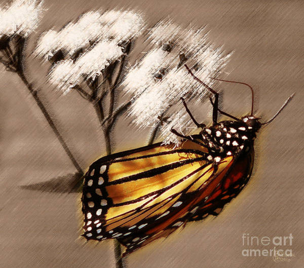 Photograph - Butterfly II by Jeff Breiman