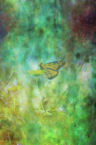 Photograph - Butterfly Impression 5653 Idp_2 by Steven Ward