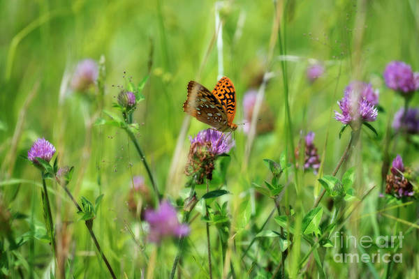 Photograph - Butterfly In Field On Flower by Dan Friend