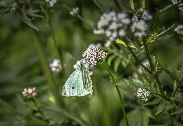 Photograph - Butterfly In Green #g6 by Leif Sohlman