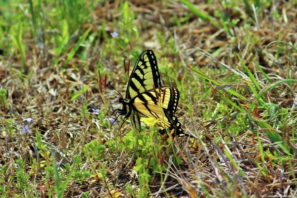 Photograph - Butterfly In The Grass by Cynthia Guinn