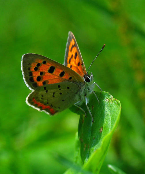 Photograph - Butterfly by Juergen Roth