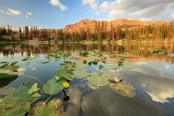 Wall Art - Photograph - Butterfly Lake by Johnny Adolphson