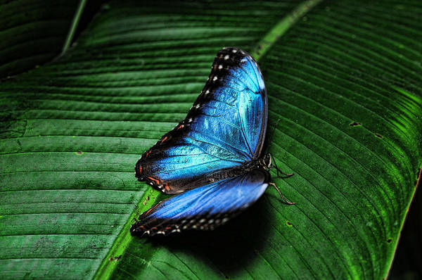 Photograph - Butterfly by Lawrence Christopher