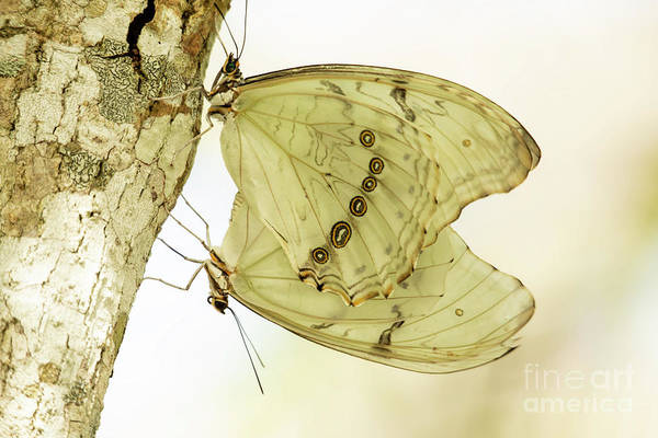 Wall Art - Photograph - Butterfly Love Is In The Air by Sabrina L Ryan