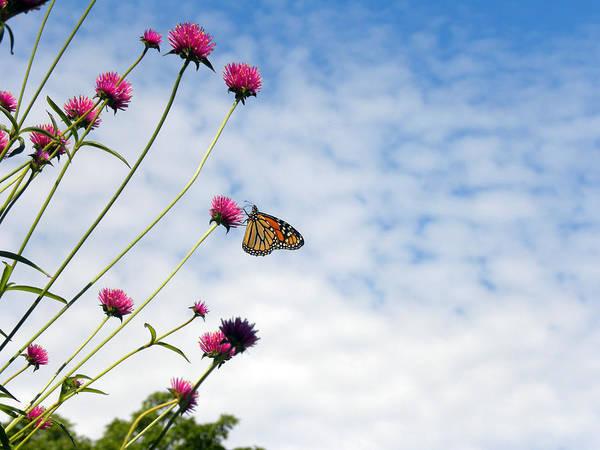 Wall Art - Photograph - Butterfly Magic by Teresa Schomig