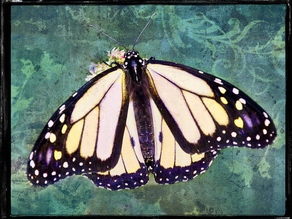 Photograph - Butterfly Memories by Leda Robertson