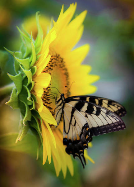 Mellow Photograph - Butterfly Mornings by Karen Wiles