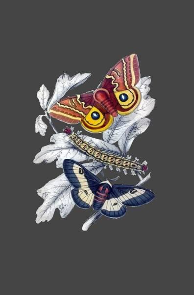 Digital Art - Butterfly Moth T Shirt Design by Bellesouth Studio