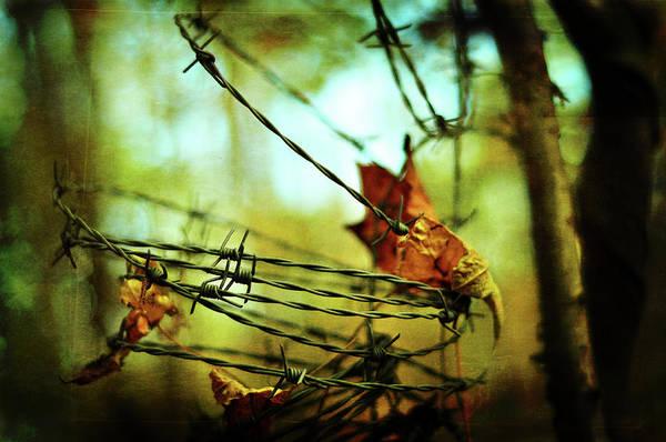 Photograph - Butterfly Net by Rebecca Sherman