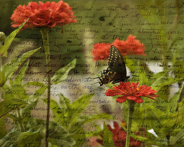Wall Art - Photograph - Butterfly Notes by Trish Tritz