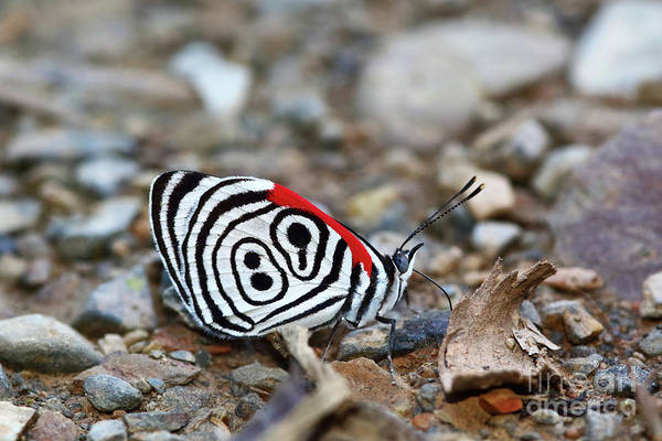 Photograph - Butterfly Number 89 by James Brunker