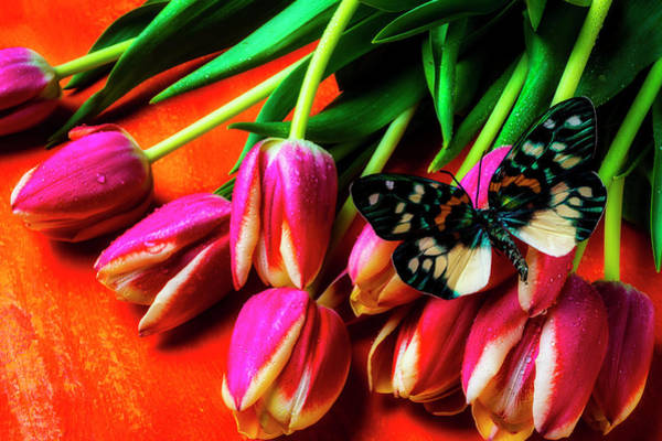 Photograph - Butterfly On Beautiful Garden Tulips by Garry Gay