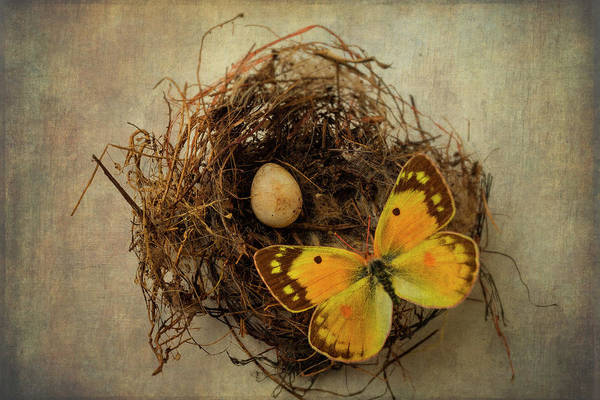 Birds Eggs Photograph - Butterfly On Birds Nest by Garry Gay