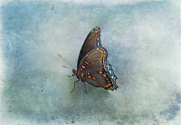 Photograph - Butterfly On Blue by Sandy Keeton