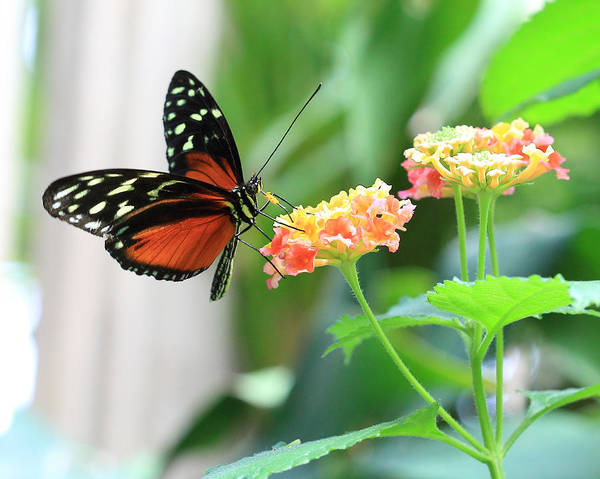Photograph - Butterfly On Flower by Angela Murdock