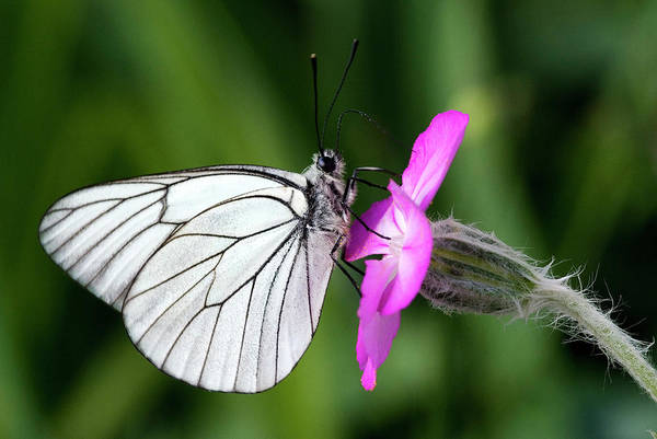 Photograph - Butterfly On Flower  by Cliff Norton