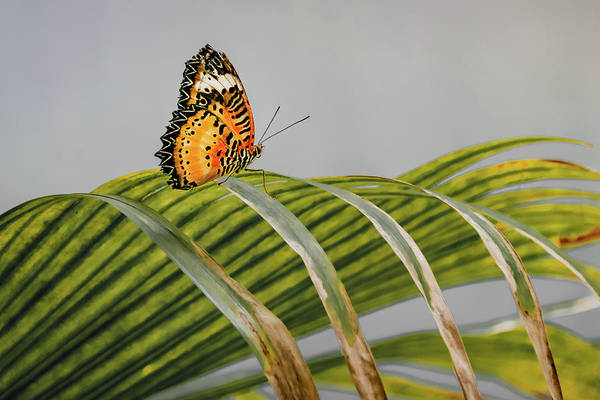 Wall Art - Photograph - Butterfly On Grass by Stanley Jayne