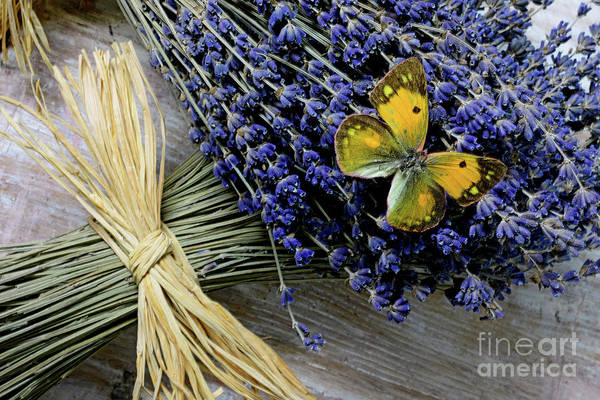 Wall Art - Photograph - Butterfly On Lavender by Paul Ward