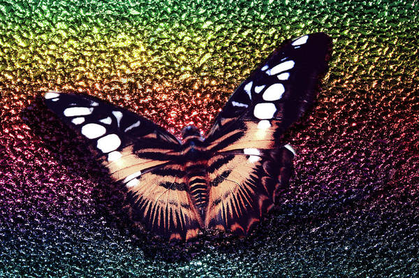 Photograph - Butterfly On Rainbow  by Jenny Rainbow