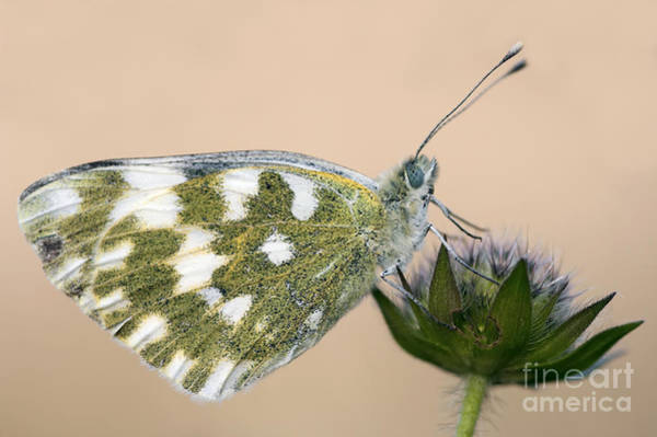 Wall Art - Photograph - Butterfly On The Flower by Michal Boubin