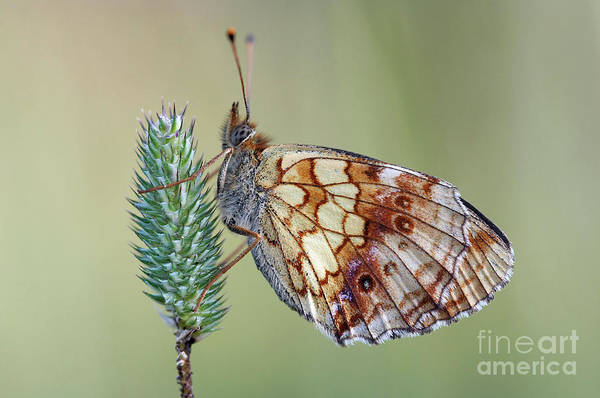 Wall Art - Photograph - Butterfly On The Grass by Michal Boubin