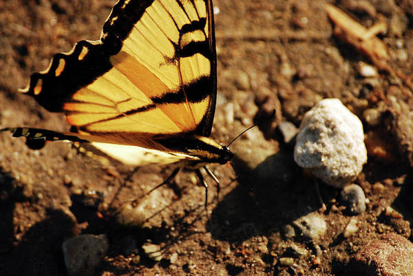 Photograph - Butterfly On The Rocks by Lori Tambakis