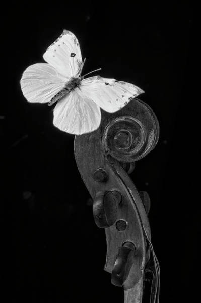 Photograph - Butterfly On Top Of Violin by Garry Gay