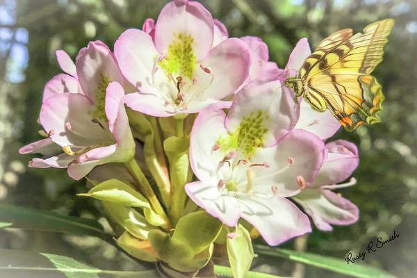 Digital Art - Butterfly On Wild Rhododendron Flower. by Rusty R Smith