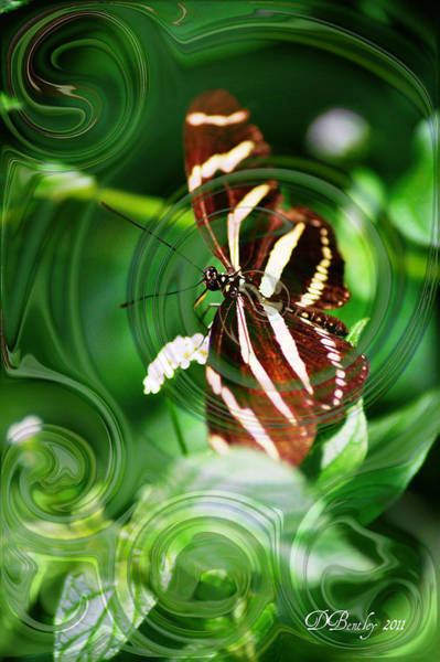 Photograph - Butterfly Overlay by Donna Bentley