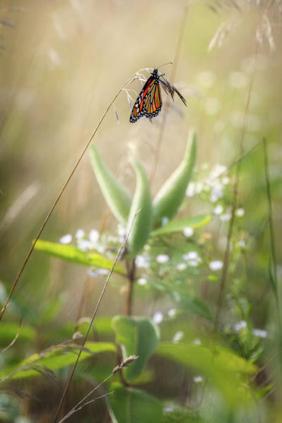 Photograph - Butterfly Paradise by Bill Wakeley