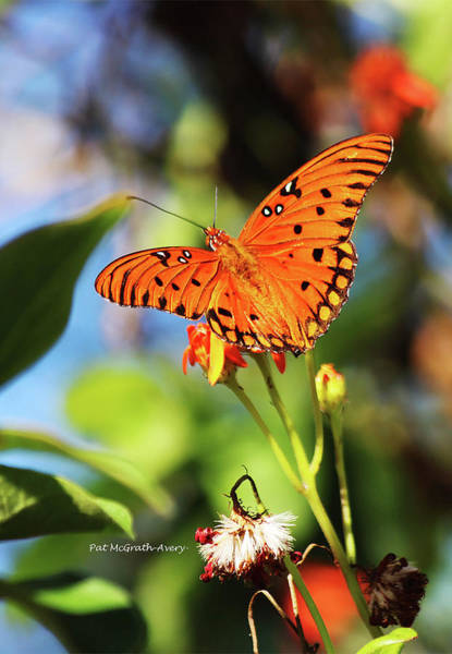 Photograph - Butterfly by Pat McGrath Avery