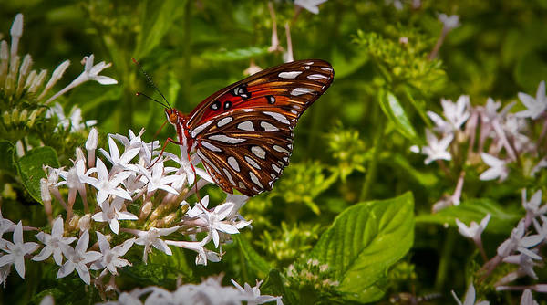 Wall Art - Photograph - Butterfly by Patrick  Flynn