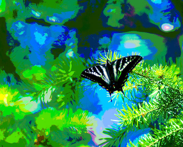 Photograph - Butterfly Photo #41 Enhanced by Ben Upham III