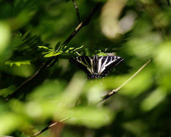 Photograph - Butterfly Photo #59 by Ben Upham III