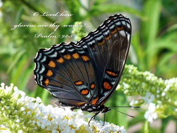 Dwayne Johnson Wall Art - Photograph - Butterfly Psalm 92 Scripture by Cindy Treger