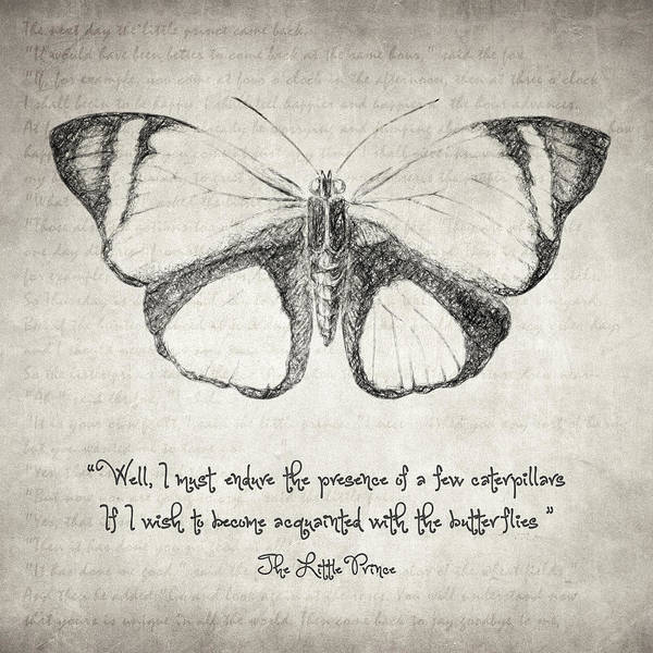 Drawing - Butterfly Quote - The Little Prince by Zapista Zapista