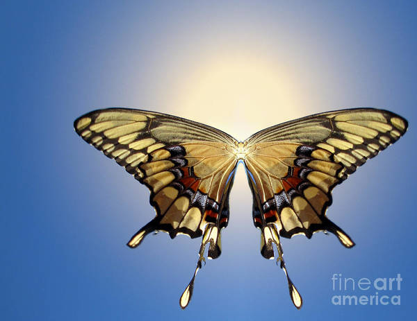 Ra Digital Art - Butterfly Ra by Earl Cockerham