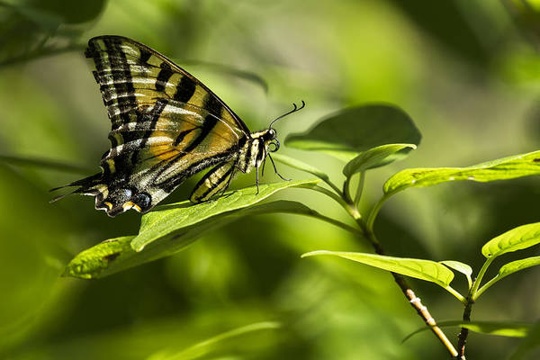 Photograph - Butterfly Resting by Belinda Greb