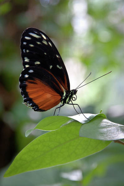 Photograph - Butterfly Royalty by James Woody