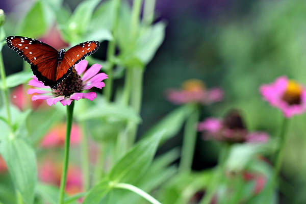 Wall Art - Photograph - Butterfly Sanctuary by Celestial Blue
