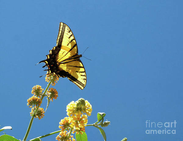 Photograph - Butterfly Sante Fe by Mary Kobet