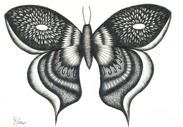 Butterfly Drawing - Burst Butterfly Drawing by Thomas Jones