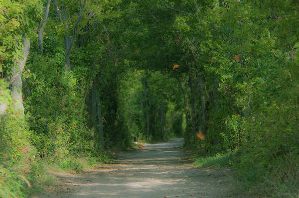 Southern Ontario Photograph - Butterfly Tunnel by Janal Koenig