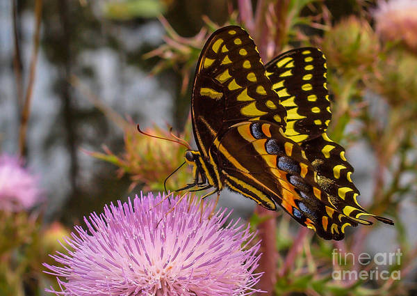Art Print featuring the photograph Butterfly Visit by Tom Claud