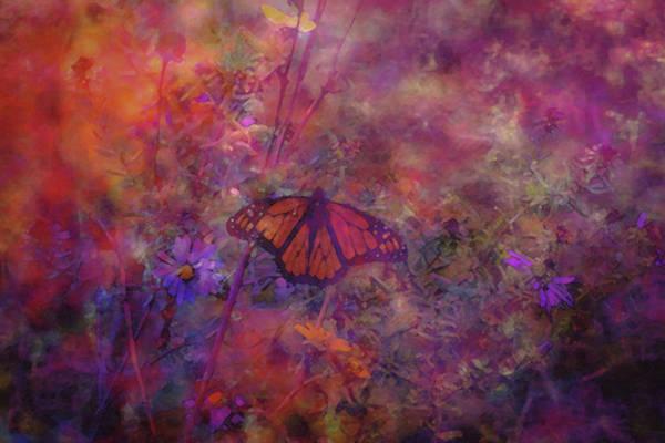 Photograph - Butterfly Wildflower Sunset 5661 Dp_2 by Steven Ward