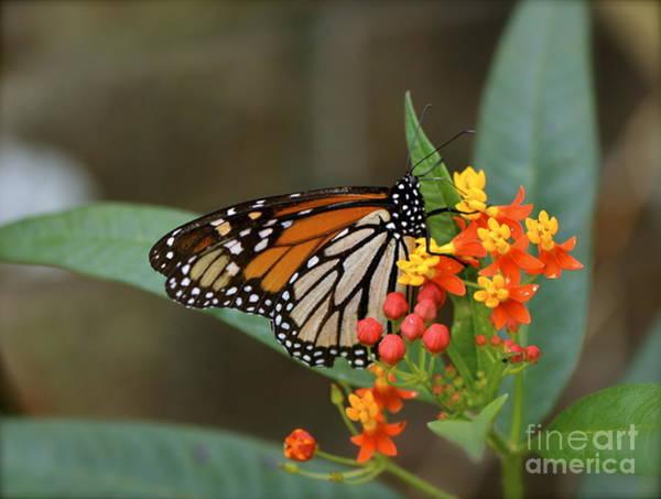 Altamonte Springs Photograph - Butterfly Wings by Lauren Medina