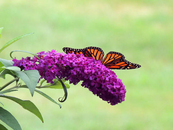Wall Art - Photograph - Butterfly Wings by Teresa Schomig